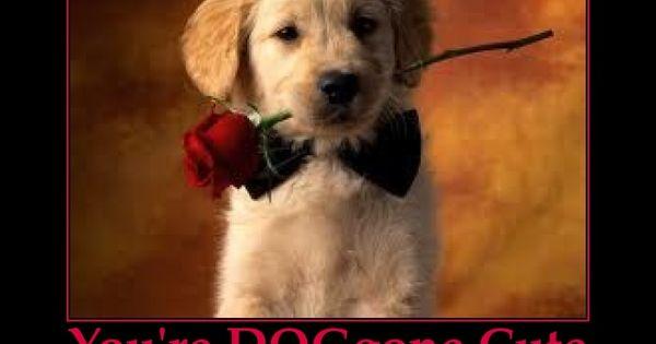Cute Bff Wallpapers Puppy Valentine Cute Pun Valentine S Day Pinterest