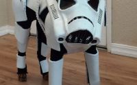 Stormtrooper Dog Costume   Costumes, Dog and Dog halloween