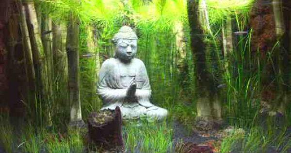 Buddha aquarium!   Aquascape   Pinterest   Aquarium and Buddha