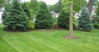 Joyful Privacy Landscaping  | Decor ideas | Pinterest ...