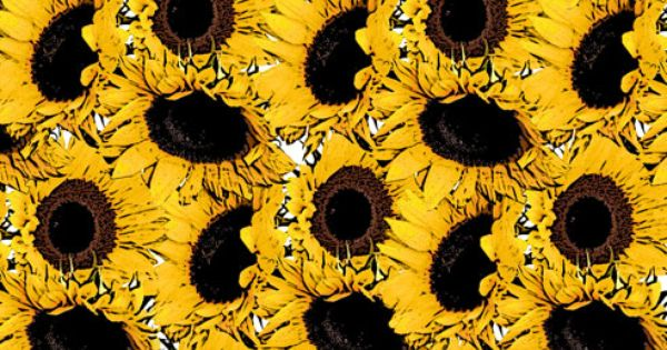 Hipster Fall Wallpaper Yellow Sunflower Background Public Domain Art And Free