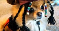 Jack Sparrow Dog Costume   Hot-Diggidi-Dog!   Pinterest ...