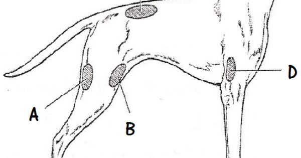 diagram of injection sites