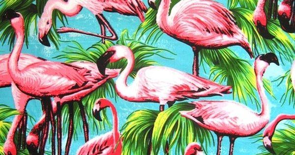Bird Of Paradise Wallpaper Iphone 5 Jennyfertropicalparadise Tropical Paradise Pinterest