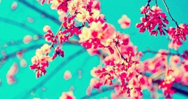 Iphone 5 Wallpaper Floral Arizona Tea Iphone Backgrounds Pinterest Cherries