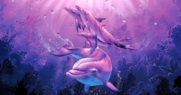 Cute Dolphin Drawing Wallpaper ★dolphin S Family★ Dolphins Wallpaper Id 1824915