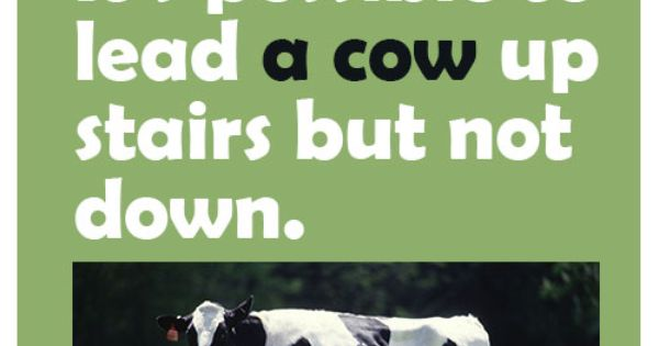 It39s Possible To Lead A Cow Up Stairs But Not Down Http