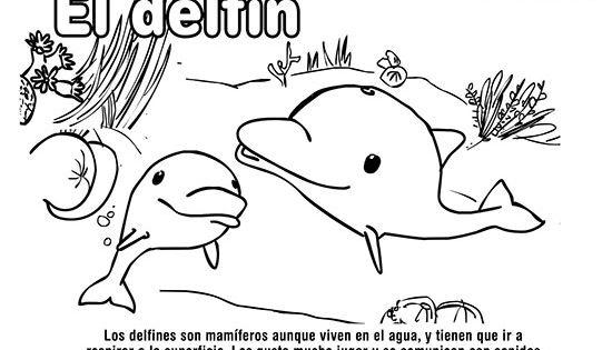 dibujos animales del mar delfin pintas animales del mar autodelfin pintas animales del mar dibujos colorear