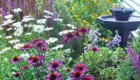 Purple coneflower, daisies, foxglove, black-eyed susans ...
