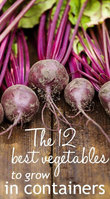 17 Best Ideas About Easy Vegetables To Grow On Pinterest | Easy To