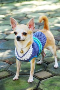 20 best images about Cute Chihuahua Clothes on Pinterest ...
