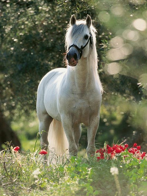 Horse Riding Wallpaper Hd 59 Best Images About Horse In A Field Of Flowers On