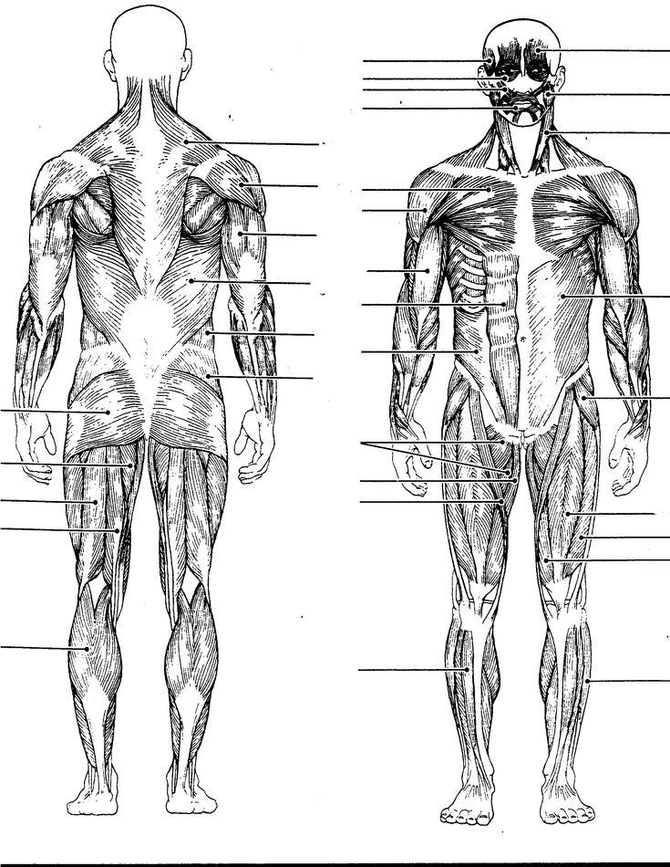 full body diagram medical chart