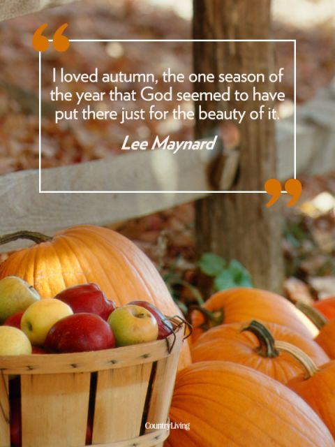 Fall Pumpkin Patch Wallpaper 23 Quotes That Will Make You Fall In Love With Autumn