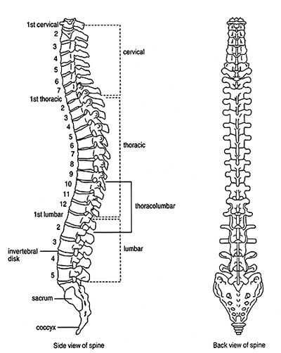diagram spine l5s1
