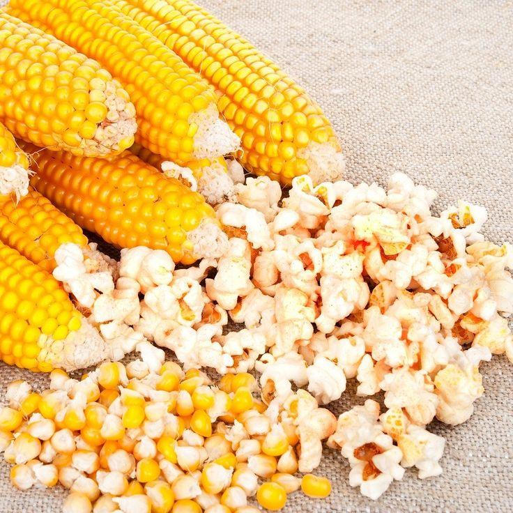 1000+ Ideas About Popcorn Seeds On Pinterest | Color Black, Black