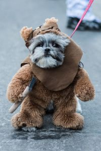 1000+ ideas about Ewok Dog Costume on Pinterest