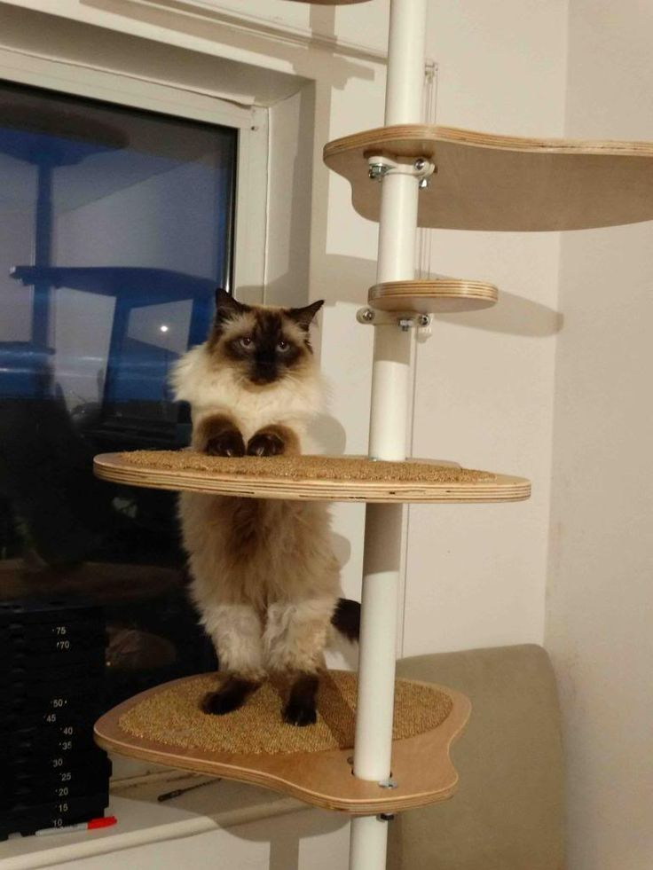 Ikea Cat Tree 17 Best Images About Inspirace Ikea Cat Stolmen On