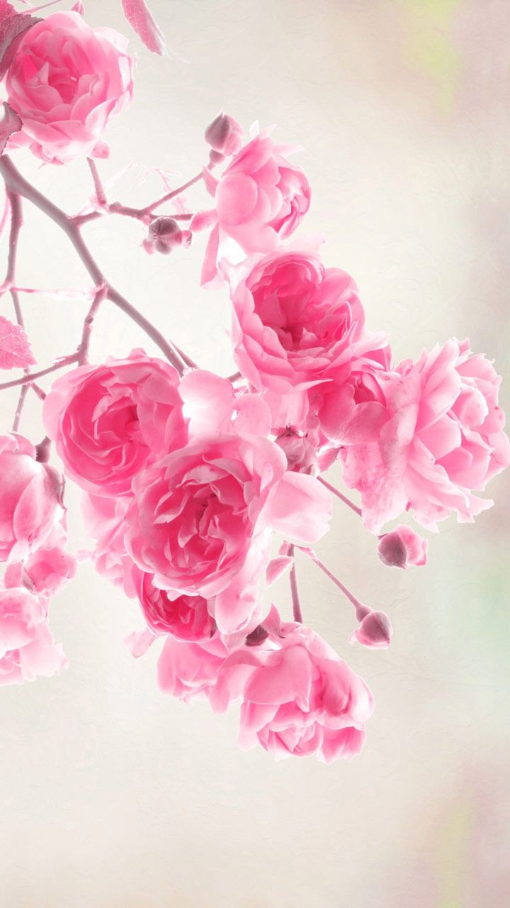 Watercolor Wallpaper Backgrounds Quote Flowers Wallpapers Pink Roses Flowers Free Computer