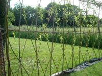 25+ best ideas about Living willow fence on Pinterest