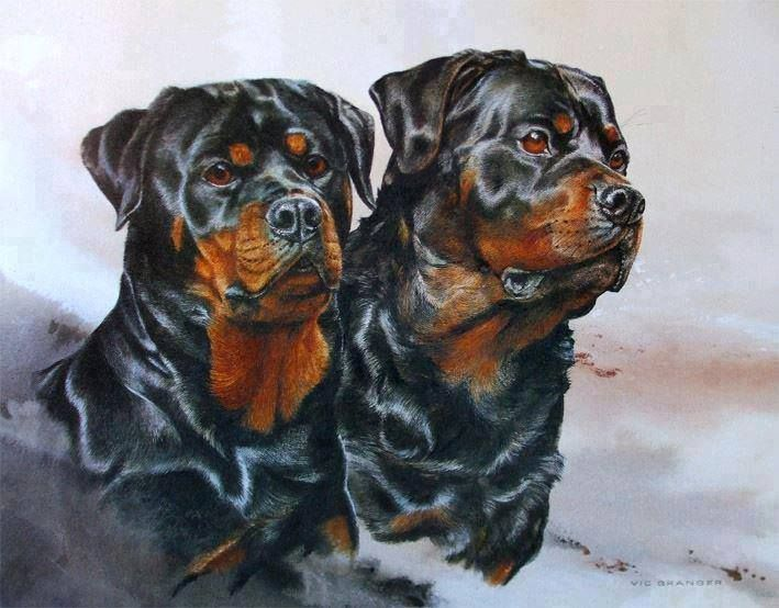 Cute Wallpapers Puppy Drawing 59 Best Images About Rottweiler Art On Pinterest