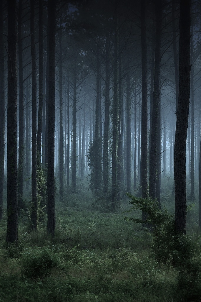 Occult Wallpapers Hd Creepy Woods Cool Scenes Pinterest Trees Places And