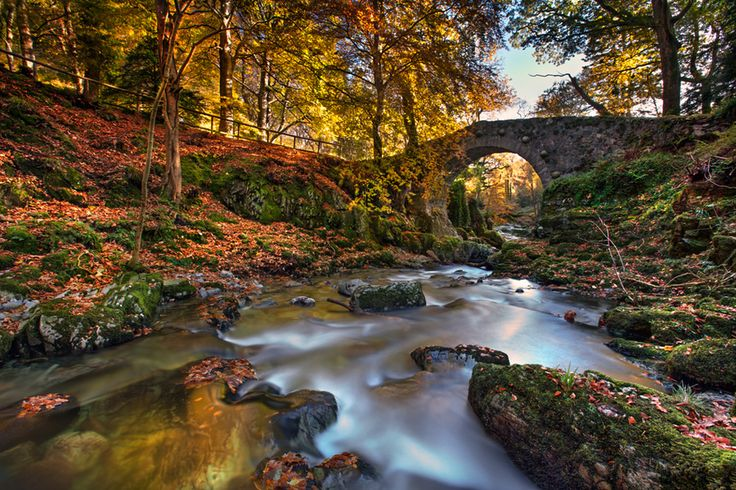 Fall In Ireland Wallpaper Tollymore Forest Foley S Bridge In Tollymore Forest Park
