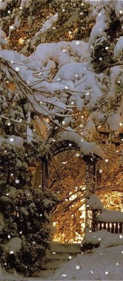 Snowfall Live Wallpaper For Iphone 125 Best Images About Her Winter Garden On Pinterest
