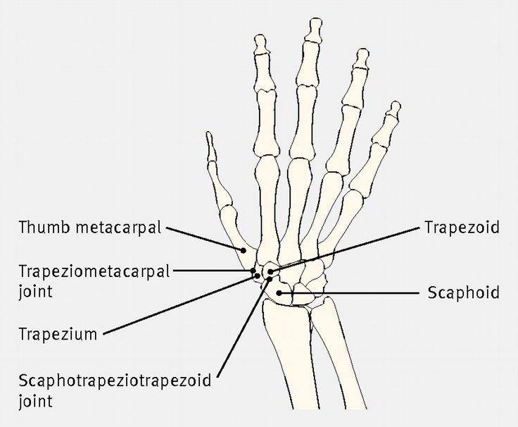bones of the hand diagram bones of the hand