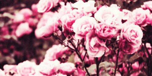 Cute Header Wallpaper Floral Header Twitter Headers And Icons Pinterest Floral