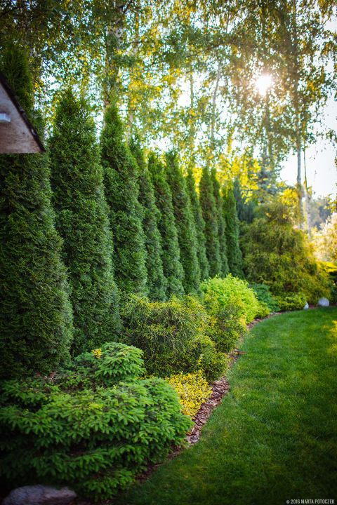 Best 25+ Privacy landscaping ideas on Pinterest