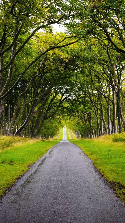 Fall Scene Wallpaper For Iphone Scotland Forest Road Iphone 6 Wallpaper Iphone