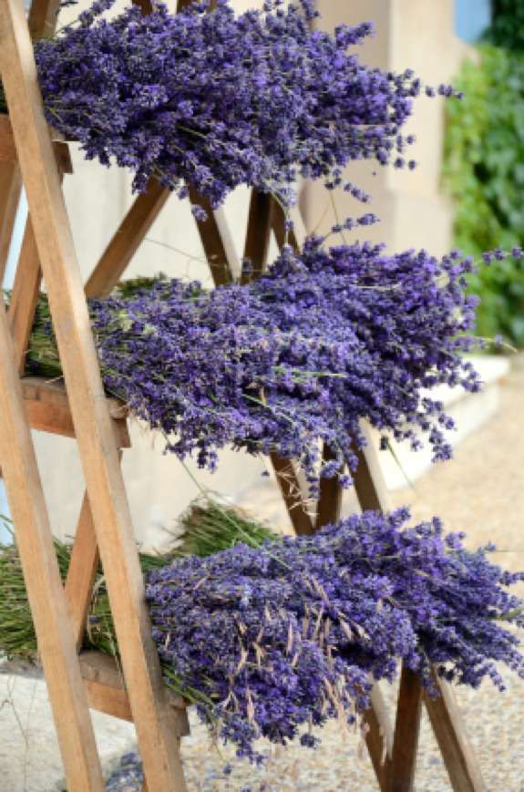 1000+ Images About Lavender On Pinterest | Lavender Candles
