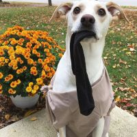 17+ best ideas about Dobby Costume on Pinterest