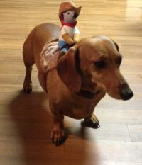 Get a long little doggy! Dachshund costume | Doxie Love ...