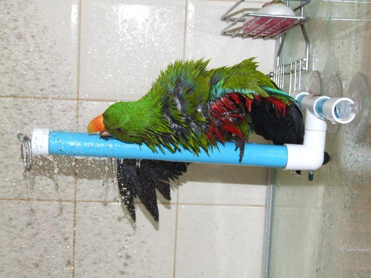 Cute Parakeet Wallpaper Let Your Bird Dry Itself After A Bath How Wet Feathers
