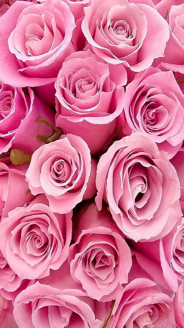 Peony Love Quote Wallpaper 84 Best Images About Cute Phone Wallpaper On Pinterest