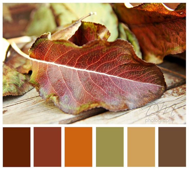 Best 25+ Autumn color palette ideas on Pinterest