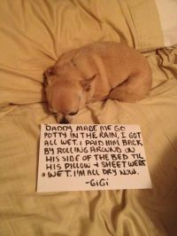 1000+ images about I love Chihuahuas on Pinterest ...