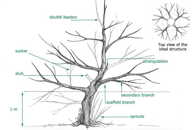my apple diagram