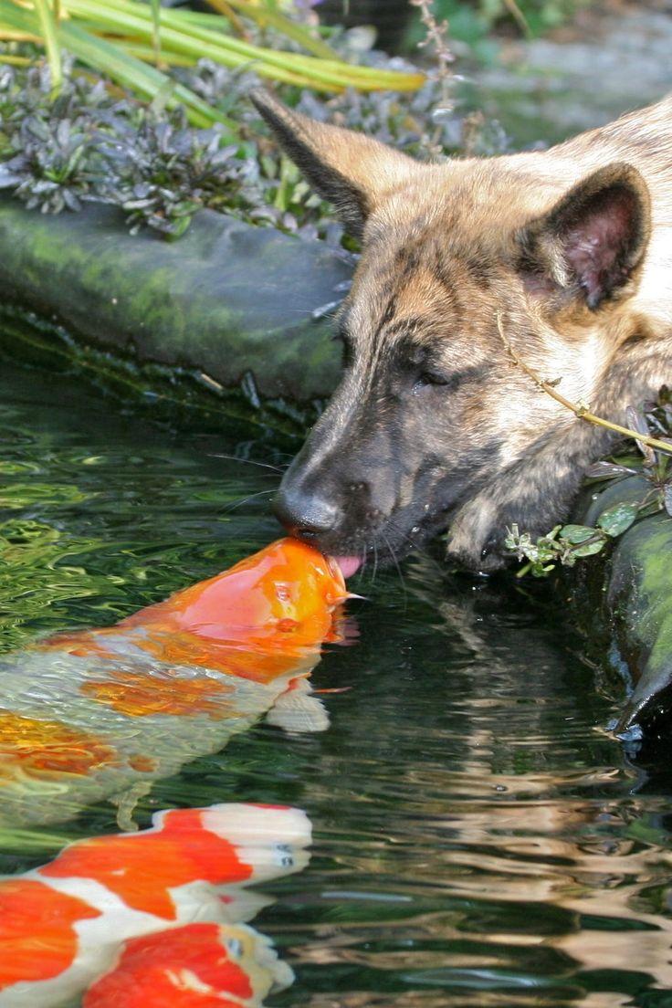 Goldfish pond species decor references - Goldfish Pond Species Decor References At The Koi Pond Kissy Kissy Download