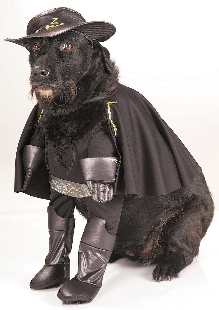 25+ best ideas about Pet halloween costumes on Pinterest
