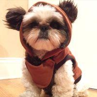 17 Best ideas about Ewok Dog Costume on Pinterest
