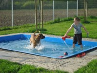 10 best images about dog pools on Pinterest | Dog pools ...