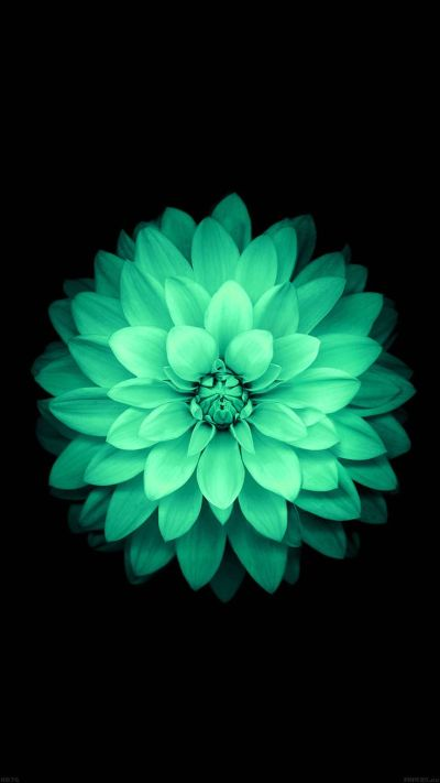 TAP AND GET THE FREE APP! Nature Flowers Mint Beautiful Dark Amazing Girly Stylish Black HD ...