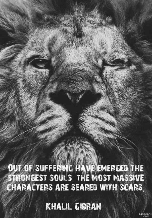 Lone Wolf Wallpaper Quote The 25 Best Lion Quotes Ideas On Pinterest Quotes On