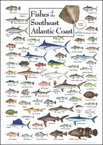 Fishes of the Southeast Atlantic Coast | Saltwater Fish Charts More