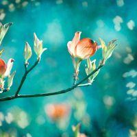 Teal Photography - orange peach teal decor flower aqua ...