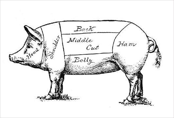 york pig diagram