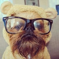 17 Best ideas about Ewok Dog Costume on Pinterest   Baby ...
